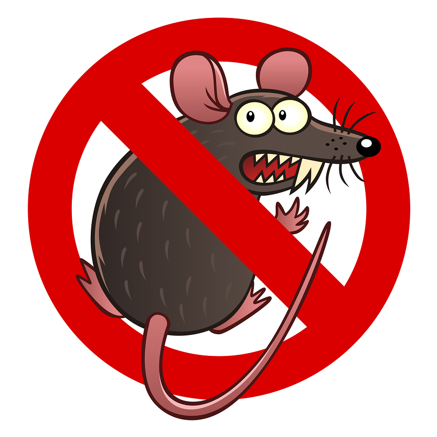 Prevent Rodents and Rodent Damage in Woodinville, WA