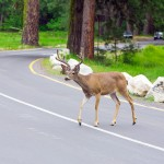 What to do if a driving emergency occurs in Woodinville, WA
