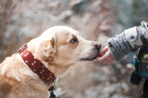 Liability Insurance for Dog Bite Claims Woodinville, WA